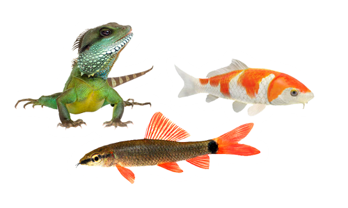 Fische aquaristik ihr partner rund ums aquarium for Aquarium fische im gartenteich